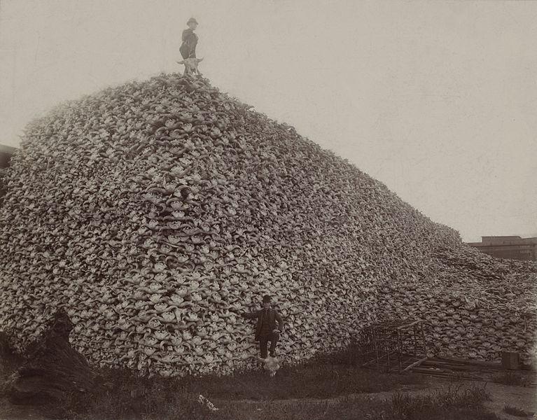 bison.skulls.1870s