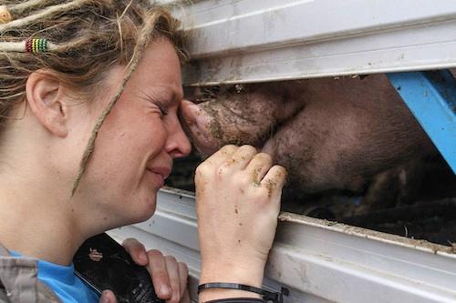 why-vegan-bearing-witness