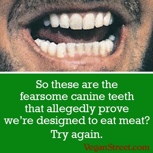 canine.teeth