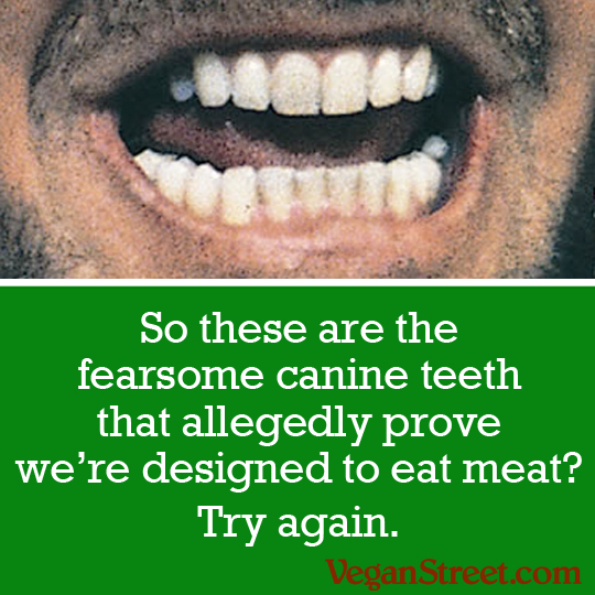 canine.teeth