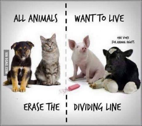 erase.the.dividing.line