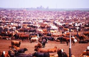 livestock-article1