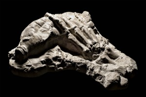 fossil.hand