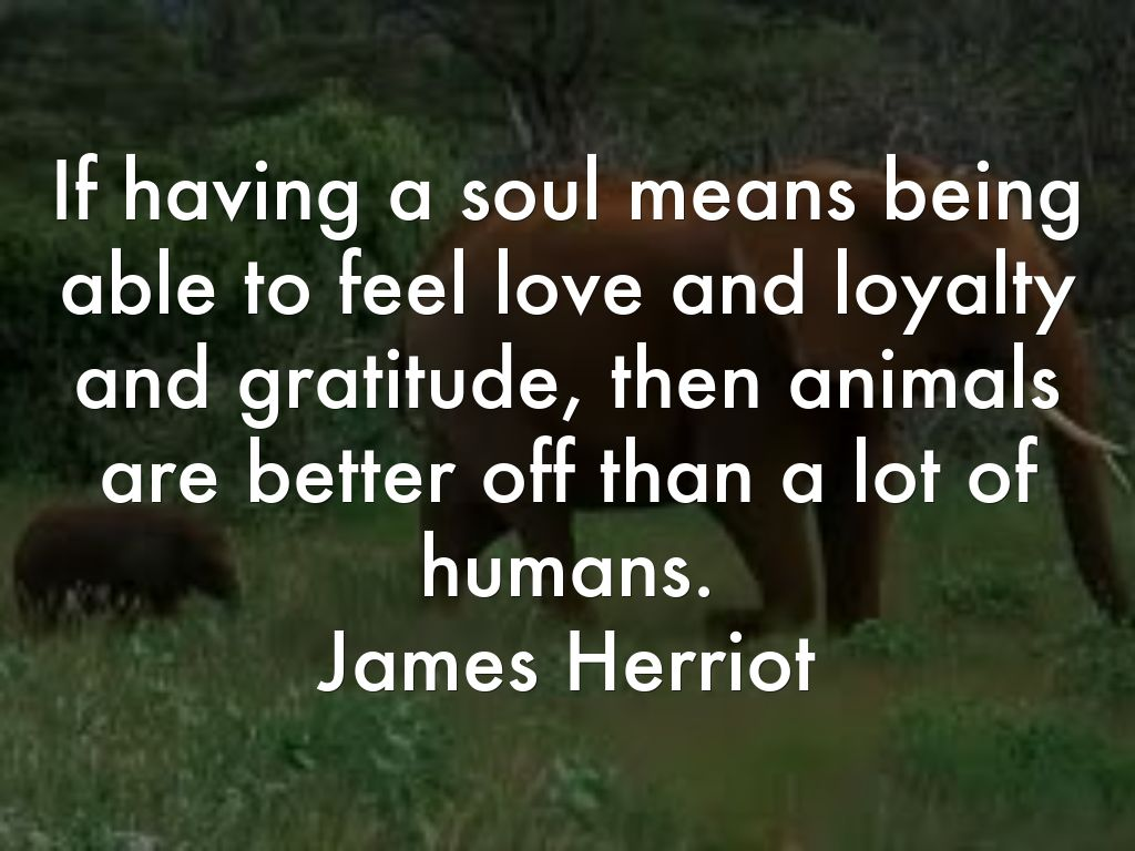 james.herriot.soul.animals