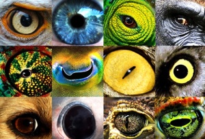 animal.eyes.morgans.lists